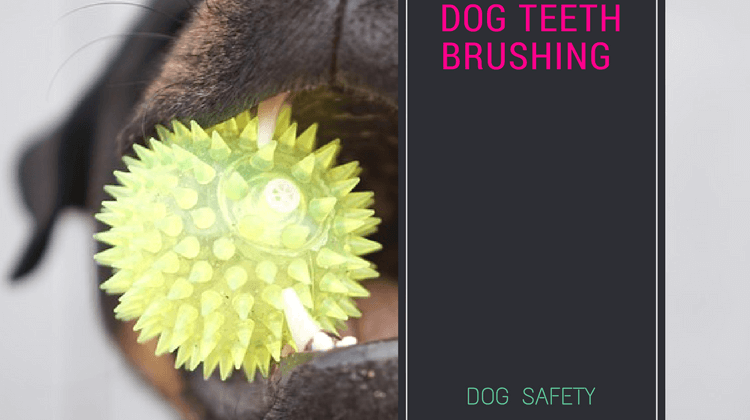 Dog teeth brushing – How and Why should you brush your dog's teeth?