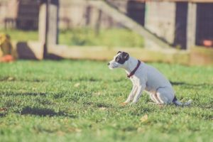 Flea Collar for Dogs Buyer's Guide