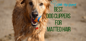 Top 7 Best Dog Clippers for Matted Hair in 2018 [For Fabulous Results]