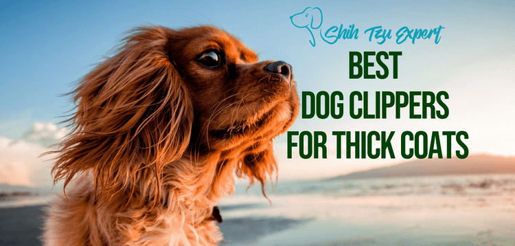 7 Best Dog Clippers For Thick Coats Amp Hair 2019 Pick The