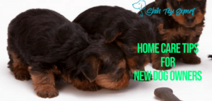Home Care Tips for New Dog Owners