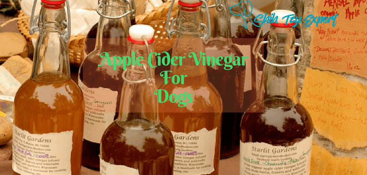 Apple Cider Vinegar For Dogs : Here are the Most Important facts!
