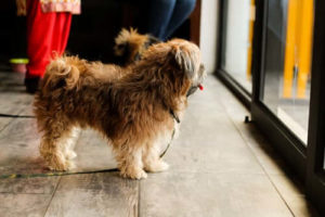 Treatment/Behavioral Interventions for Fearful and Anxious Dogs