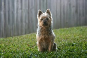 Wireless dog Fences